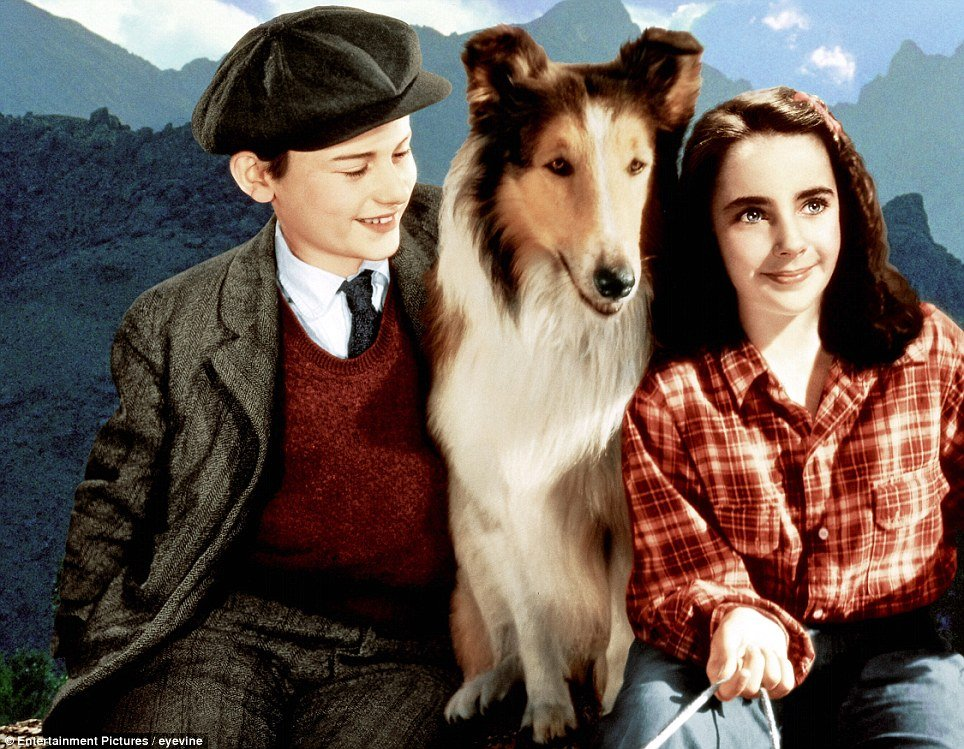 Image result for lassie come home 1943 movie
