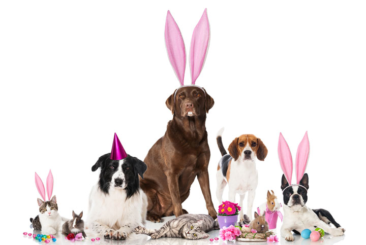 Happy Easter from Bowhouse to all our pet-loving friends