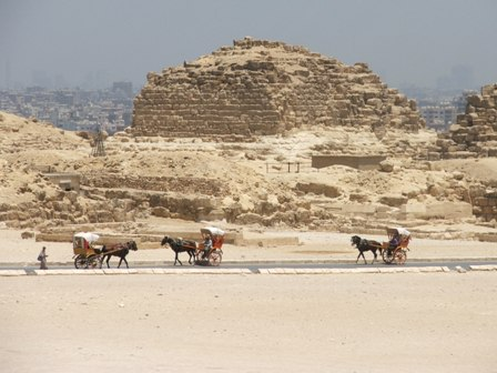 Horses and carts at Giza