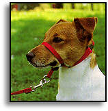 Gentle Leader Headcollar available from Bowhouse