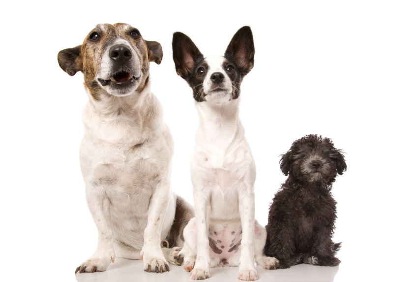 Small-Medium Breed Dog Bowhouse: Simply the Best