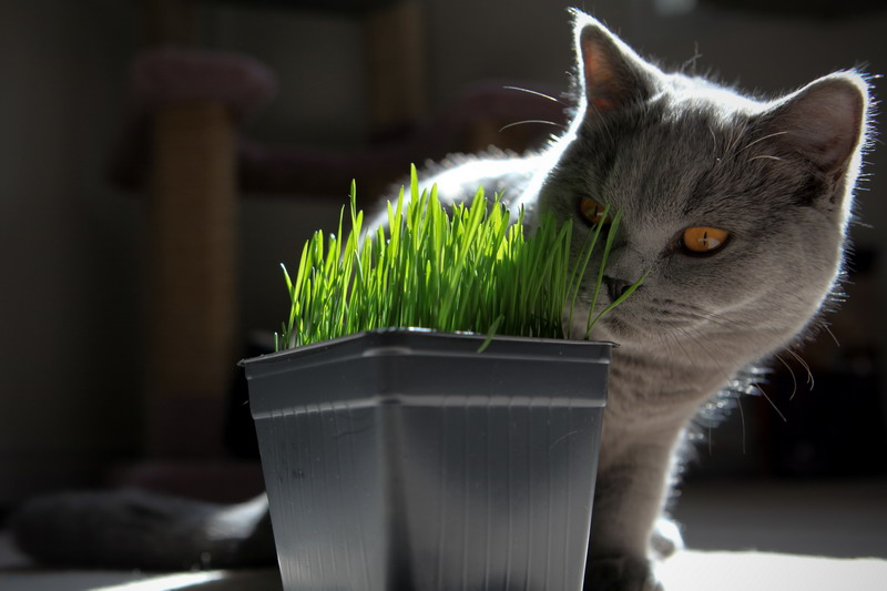 Concorso Design Your Cat : Create a garden your cat will purr about