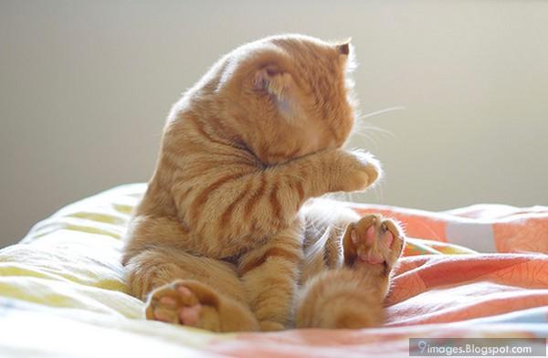 cat lover dating