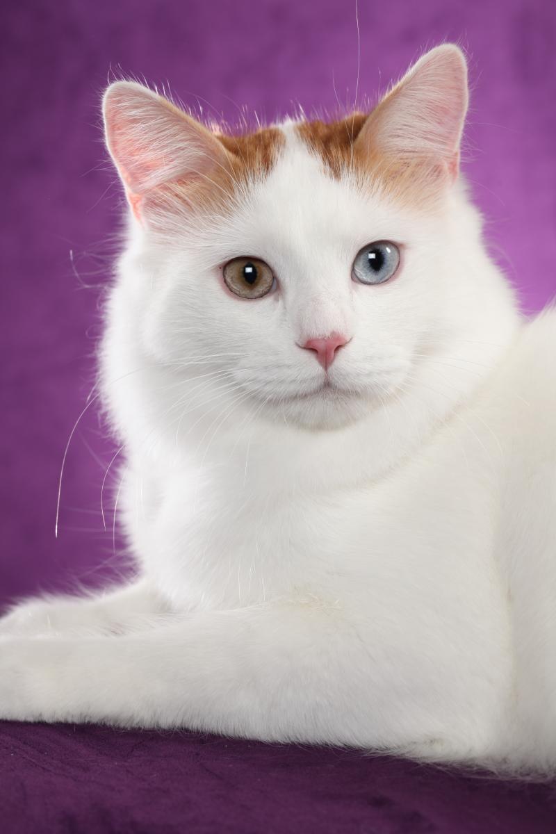 stretchy cat collar