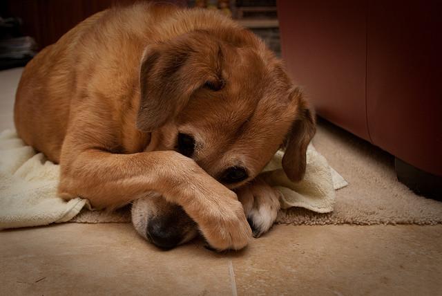 Почему от собаки воняет тухлятиной