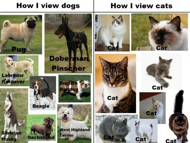 Cat Breeds More Than You Might Expect