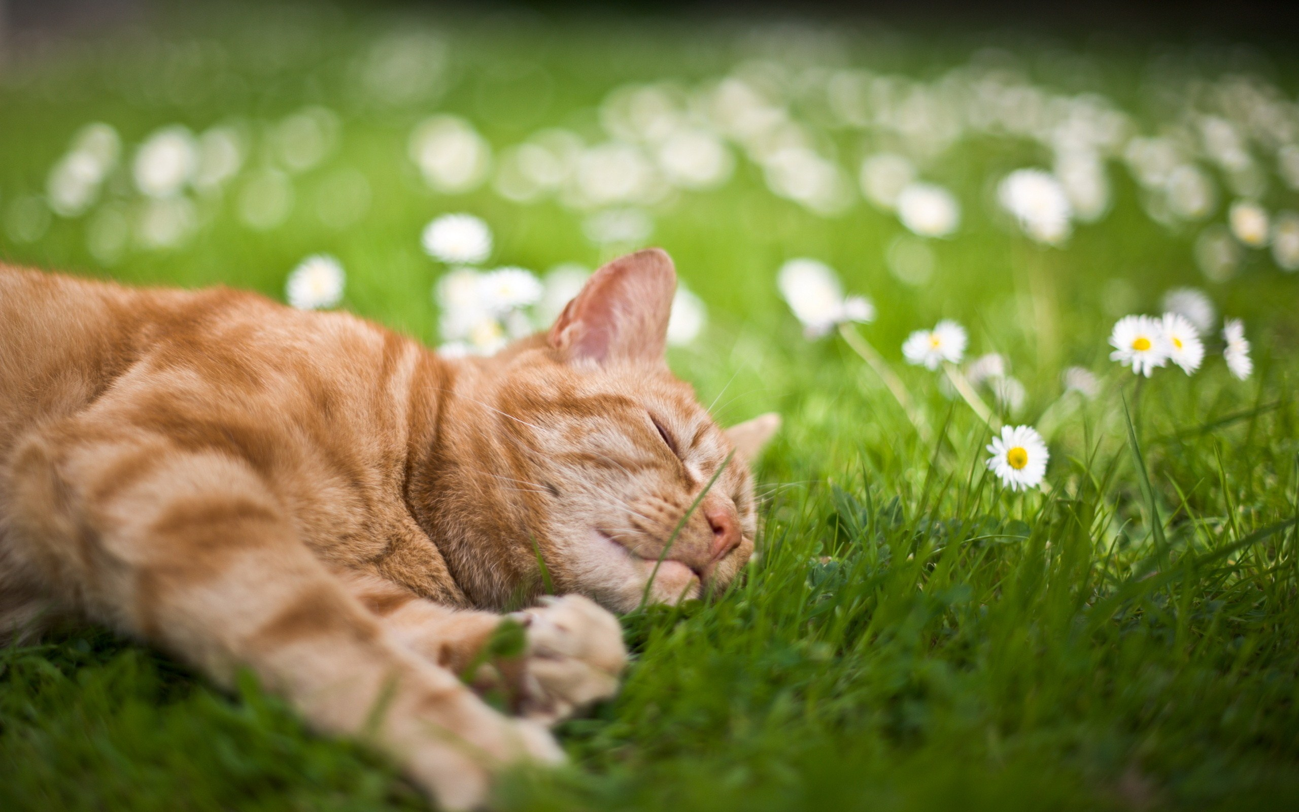 How To Keep Uninvited Cats Out Of Your Garden
