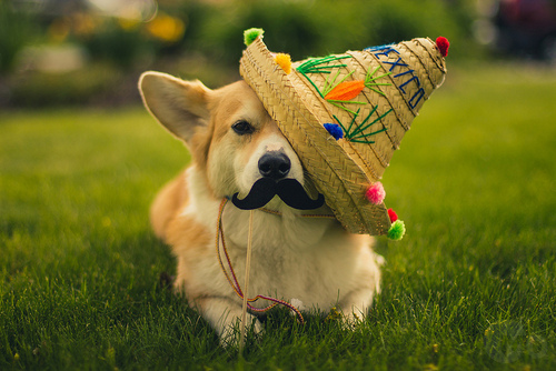 How To Throw A Cinco De Mayo Party As Told By Cats And Dogs
