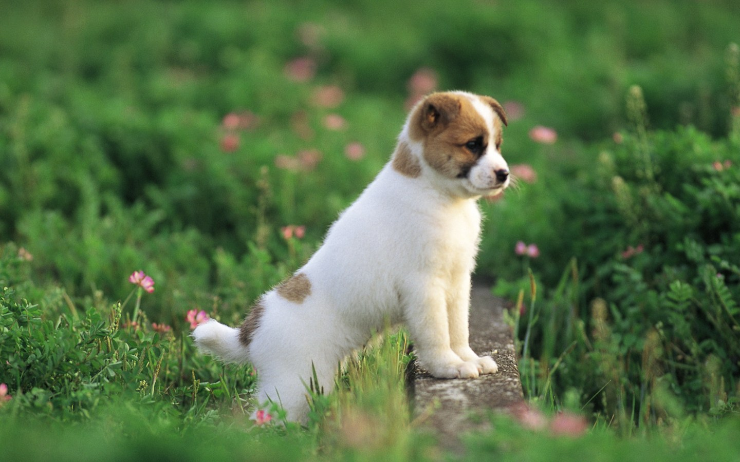 5 Essential Items Every New Puppy Owner Should Have