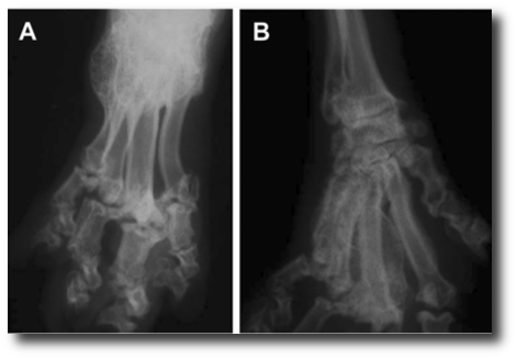 Skeletal Deformities In Cats
