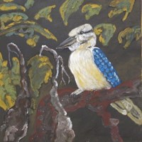 Mark Nodea / Birds of the Kimberley - Kookaburra