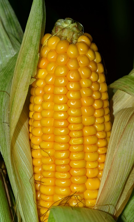 Xylitol can be made from corn husk