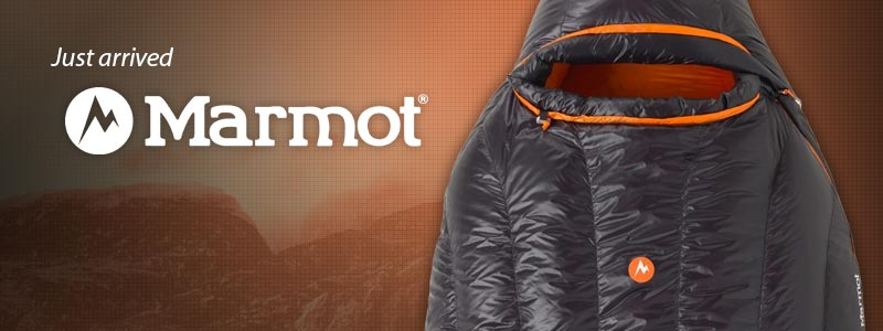 Marmot Just Arrived