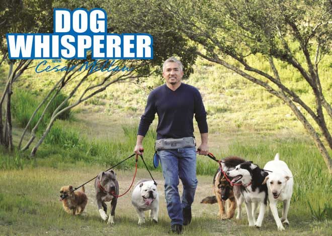 Cesar Millan with Professional Dog Walker's belt