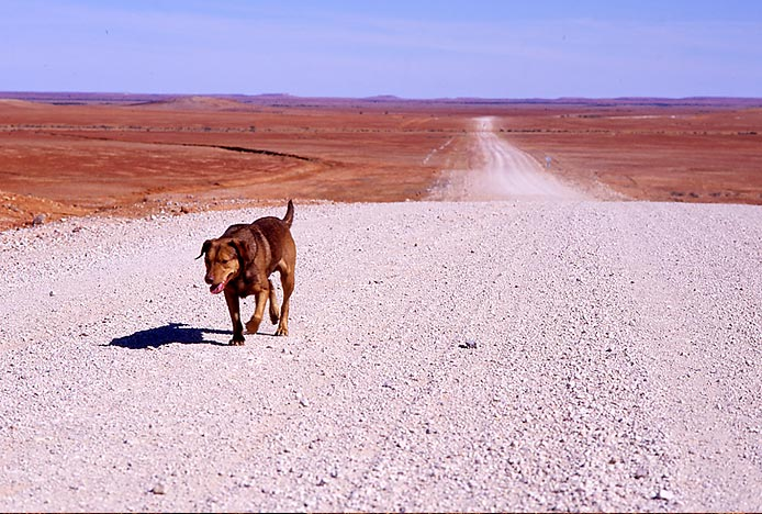 Outback Mongrel photo by David Darcy