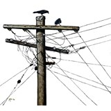 Canvas Print-  Electric Crows