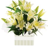 Oriental Lilies, Arrangements From $65