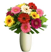 Gorgeous Gerberas, Bunches From $55