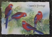 Four Rosellas