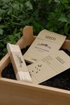 Seed Envelopes
