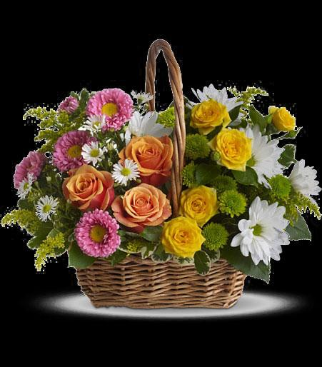 T213 2A Sweet Tranquility Basket Cainsbridalwreath