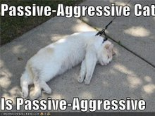 The Aggressive cat's lesser known and far less threatening cousing: