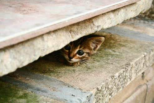 Scaredy Cat: How to Handle a Frightened FelineScared Kitten Hiding