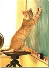 Who let this kitty into the classroom? That noise is making this the worst show and tell ever.