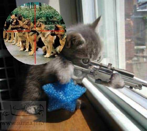 Perros Vs. Gatos Catsniper