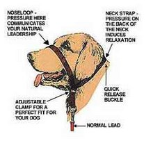 Walking your dog is no longer a game of tug-of-war with the Gentle Leader training tool.