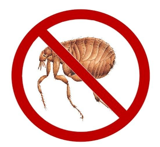 no flea sign