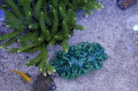 Zeovit healthy coral examples from customer