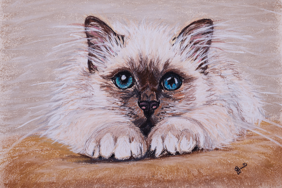 Pastal Painting of Kitten Animal and Pet Portraits