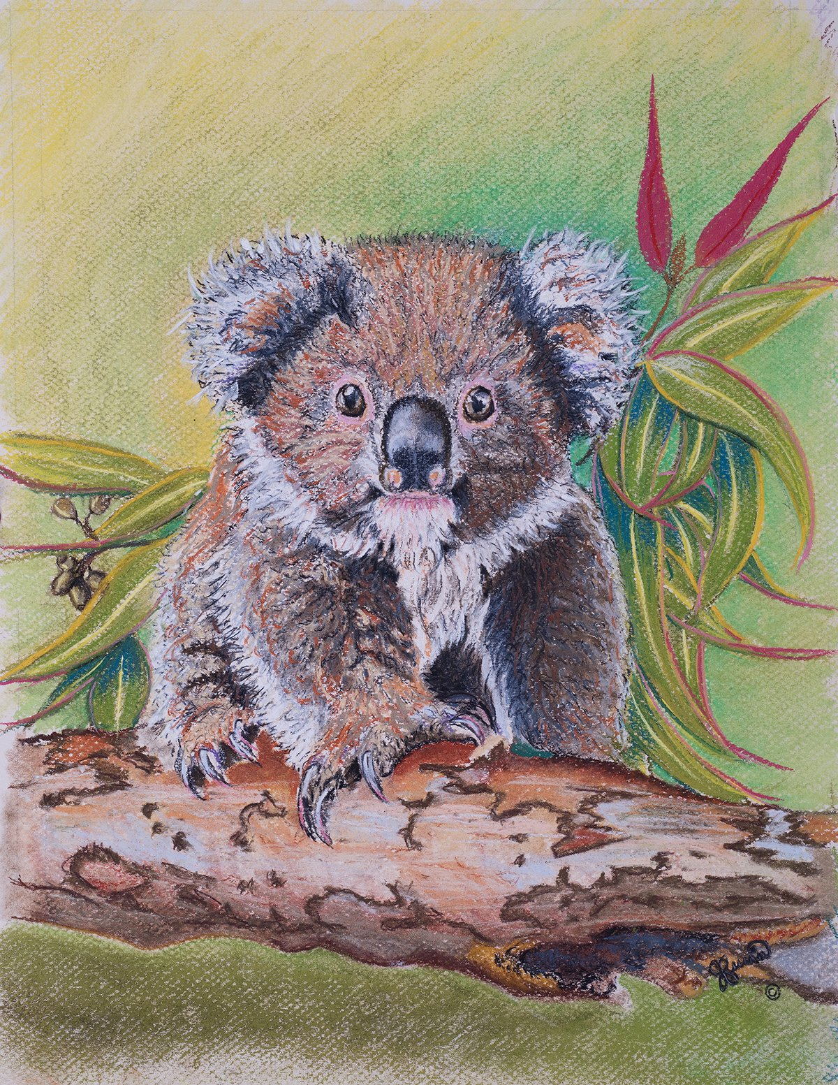 Pastal of Native Koala for Animal Art.