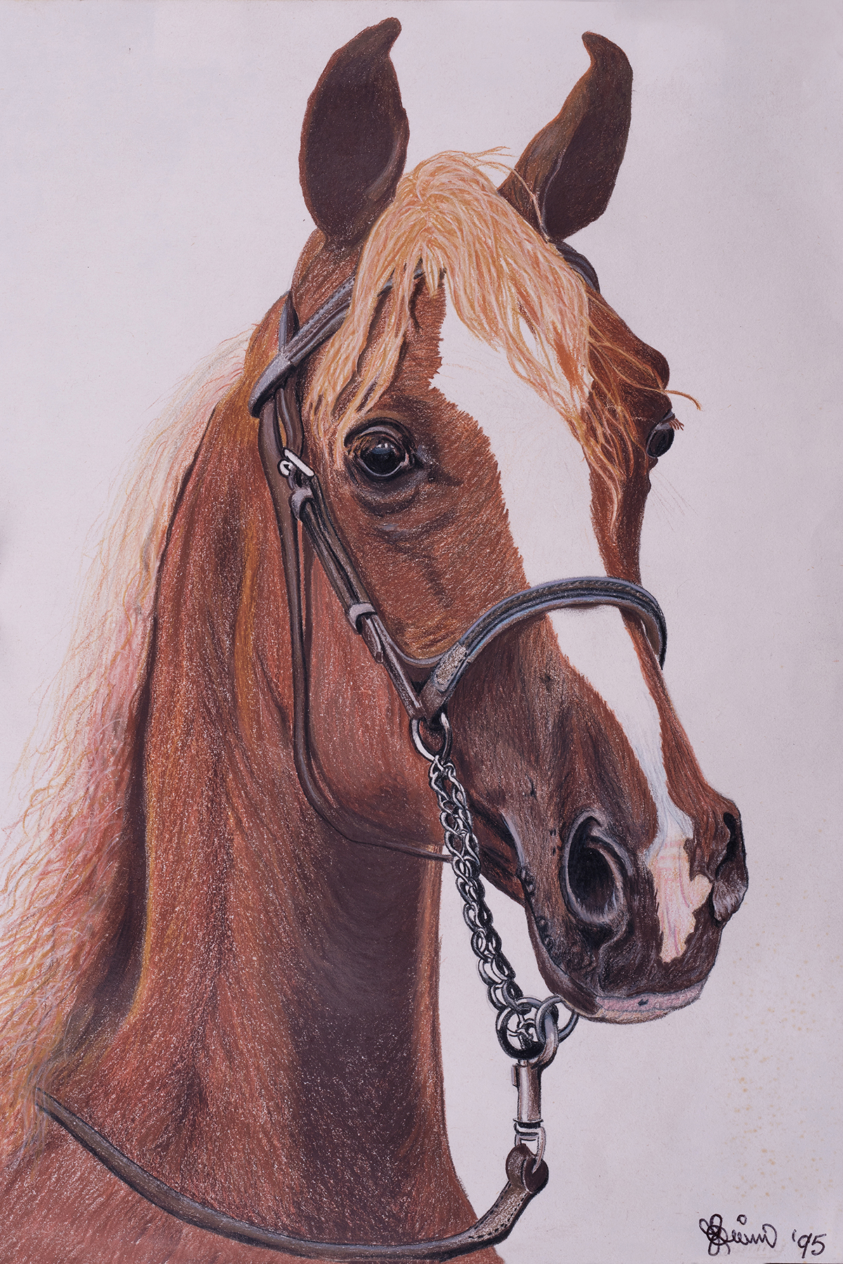 Colour pencil Horse Portrait of highest quality far more detail than any Medium.