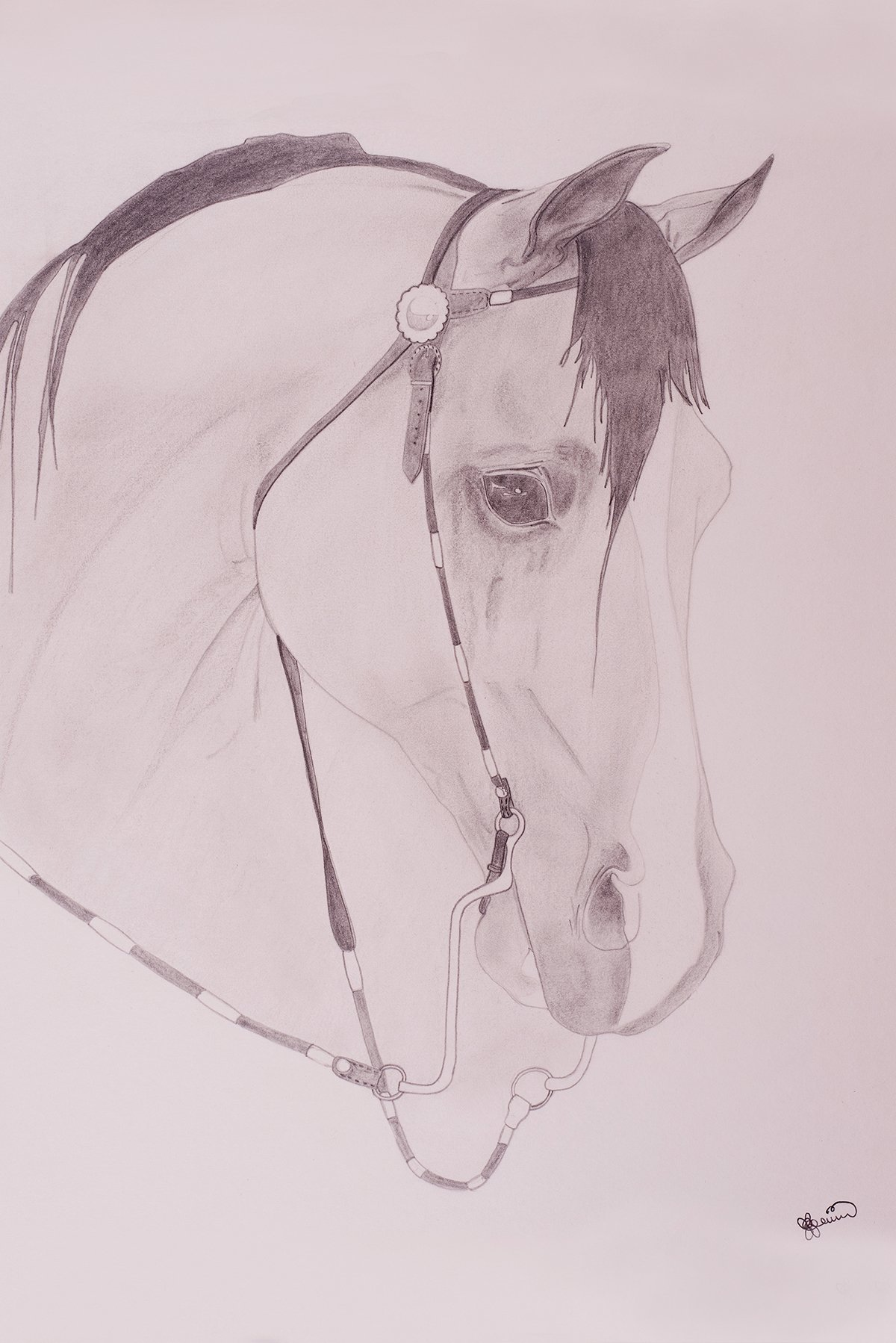 Graphite Horse painting and drawing used for Portraits also