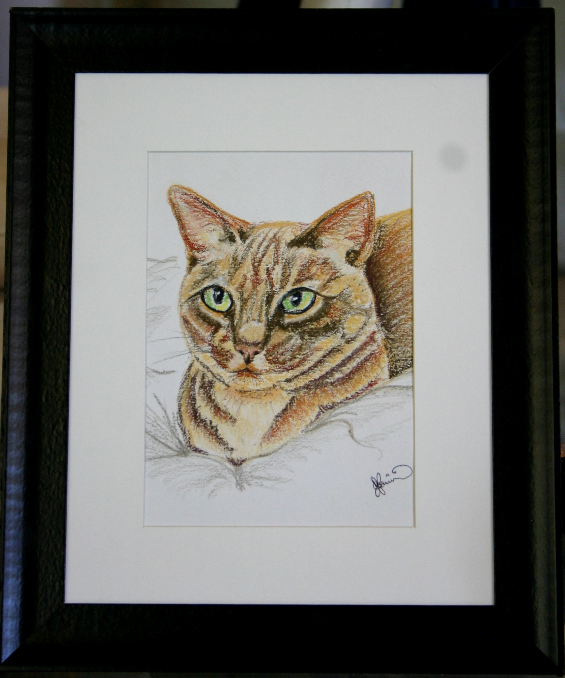 Cat portrait or Pet Portrait